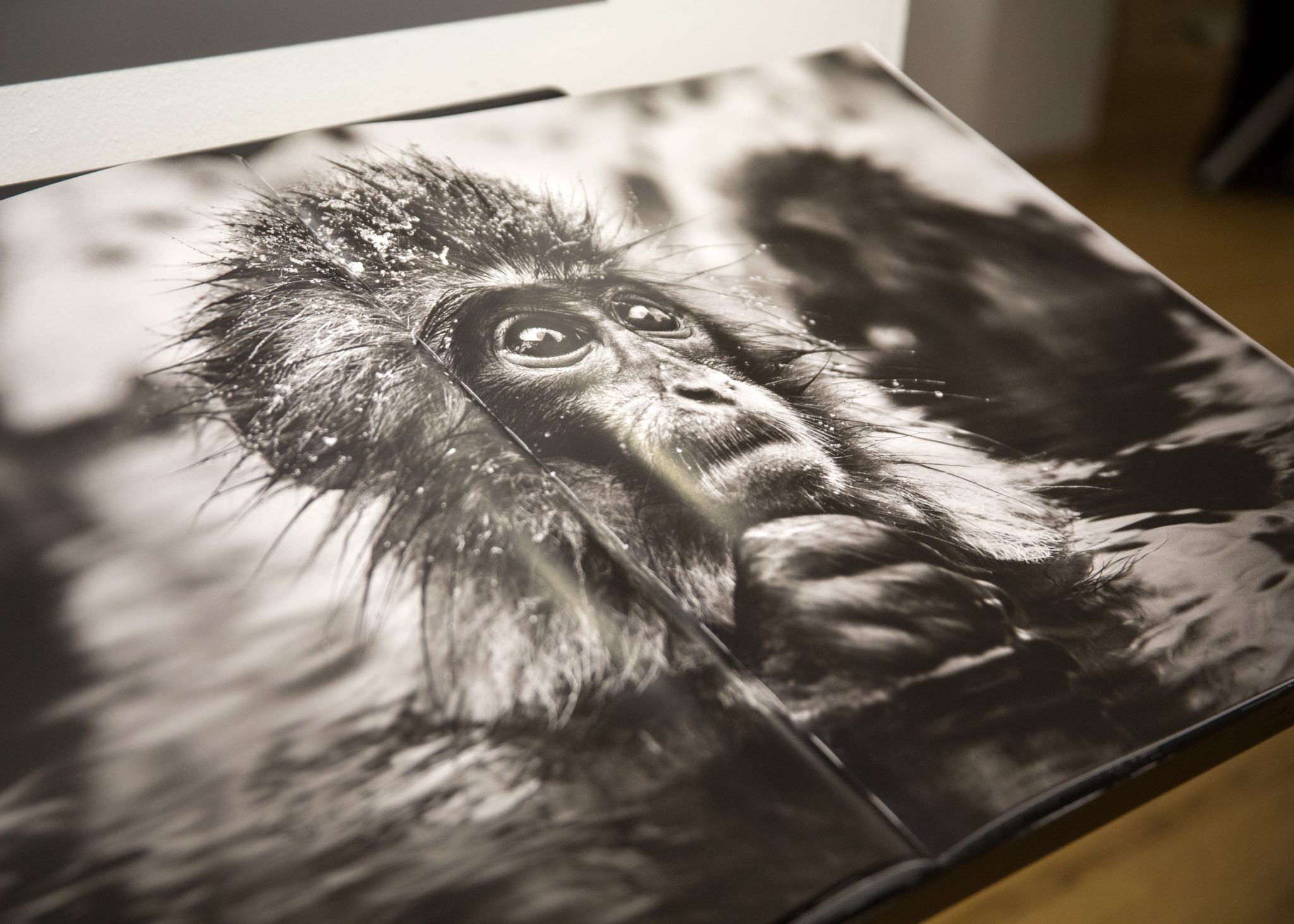 Hilton Asmus Contemporary Presents WILD ENCOUNTERS Review - photography exhibit by David Yarrow